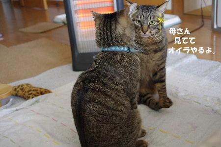 2011_0222toppo0057.jpg