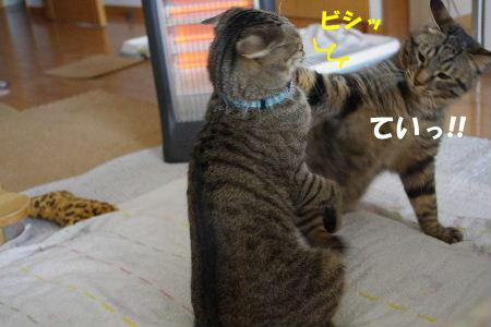 2011_0222toppo0058.jpg