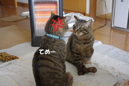 2011_0222toppo0059.jpg