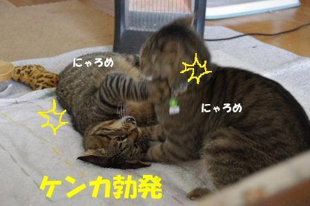 2011_0222toppo0062.jpg