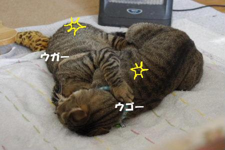 2011_0222toppo0065.jpg