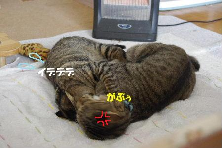 2011_0222toppo0066.jpg