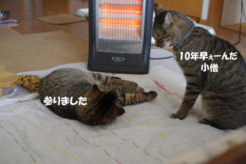 2011_0222toppo0070.jpg