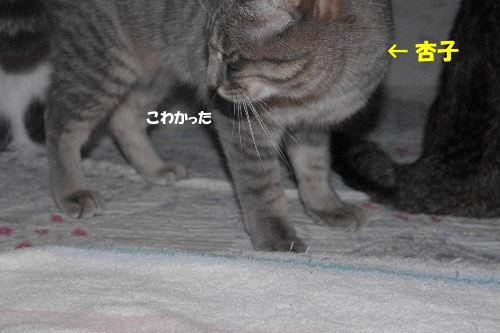 2011_0411toppo0031.jpg