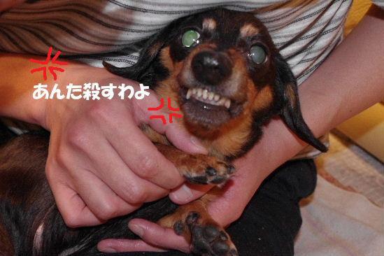 2011_0417toppo0034.jpg