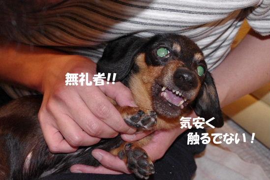 2011_0417toppo0035.jpg