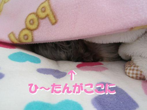 1121IMG_0140.jpg