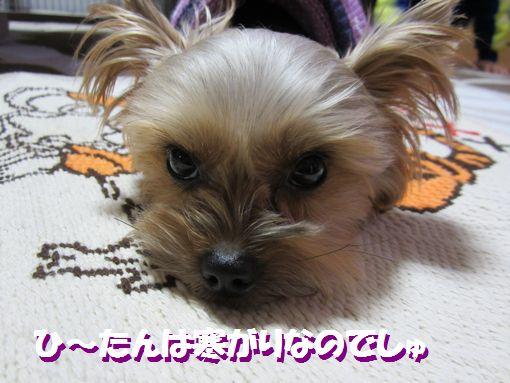 1124IMG_0156.jpg