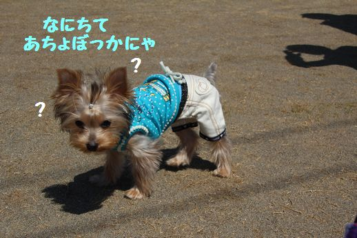 IMG_0300120408.jpg