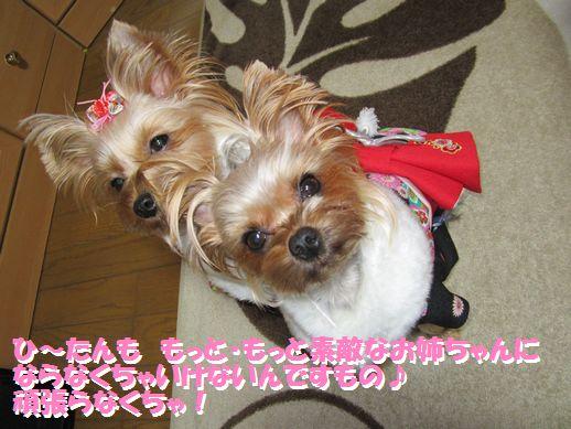 IMG_0395120101.jpg