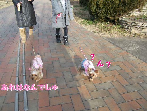IMG_0427120103.jpg