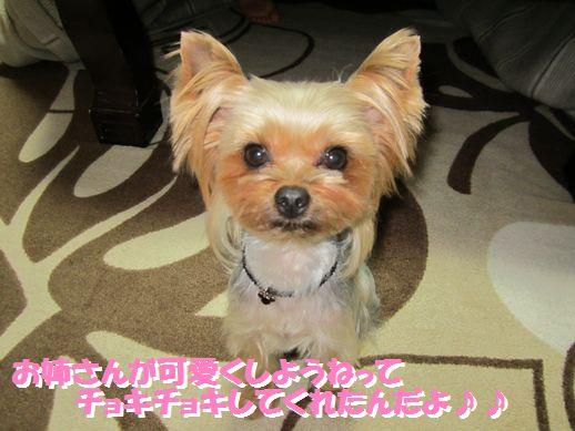 IMG_0611120126.jpg