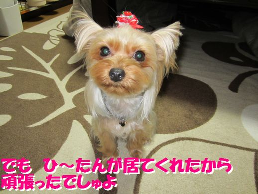 IMG_0612120126.jpg