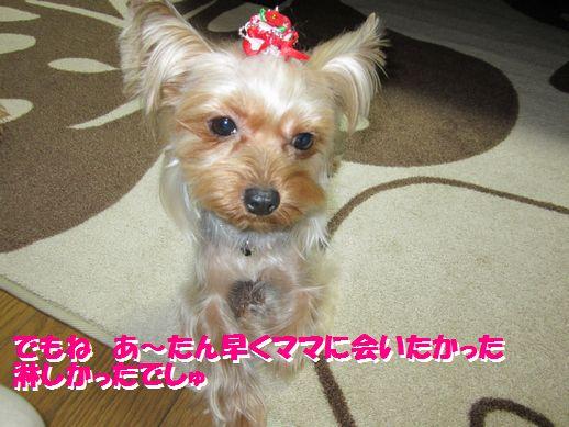 IMG_0613120126.jpg