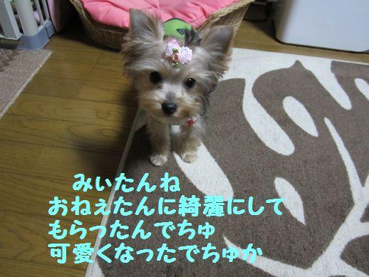 IMG_0787120324.jpg
