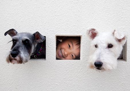 dog_179.jpg