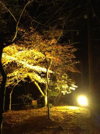 20111112-003.jpg