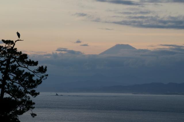富士山と烏帽子岩と鳥