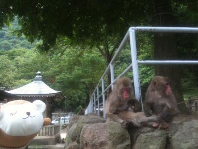 大分・高崎山「おさる茶屋」5