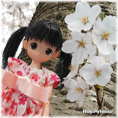 もこちゃん&桜