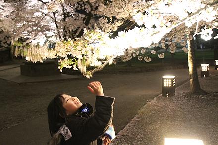 鶴ヶ城夜桜2011 4 29 003