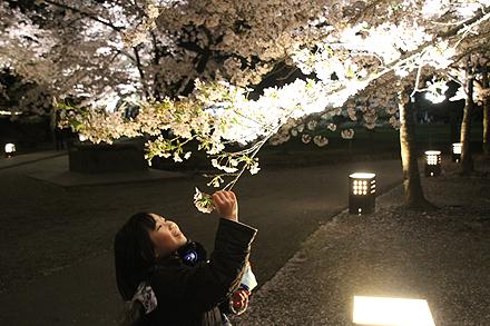 鶴ヶ城夜桜2011 4 29 004