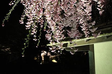 鶴ヶ城夜桜2011 4 29 001
