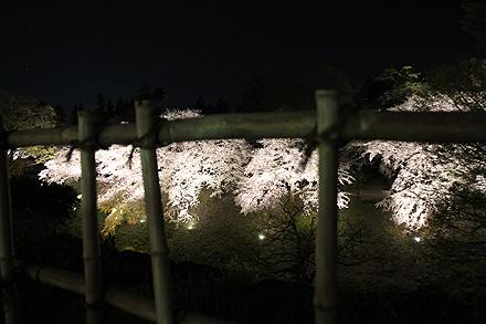 鶴ヶ城夜桜2011 4 29 007
