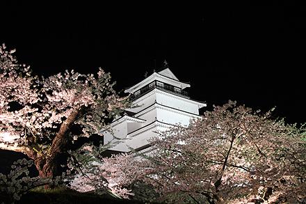 鶴ヶ城夜桜2011 4 29 015