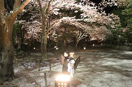 鶴ヶ城夜桜2011 4 29 014