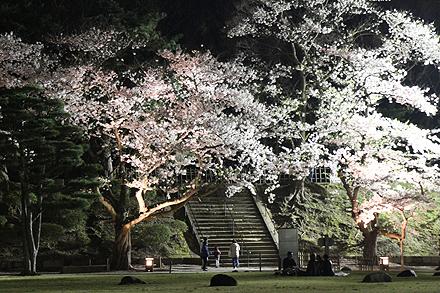 鶴ヶ城夜桜2011 4 29 013
