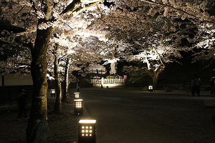 鶴ヶ城夜桜2011 4 29 012