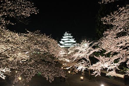 鶴ヶ城夜桜2011 4 29 011