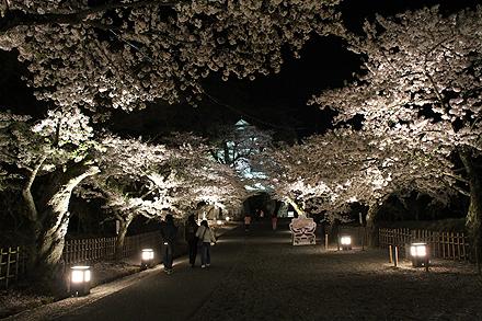 鶴ヶ城夜桜2011 4 29 019