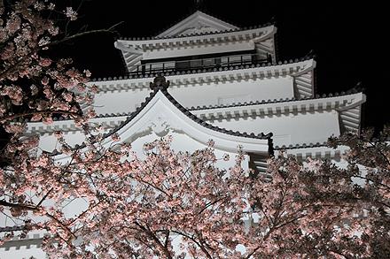 鶴ヶ城夜桜2011 4 29 016