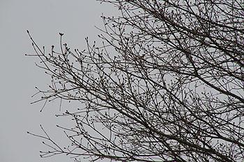 戸赤の山桜 2011 5 1 001