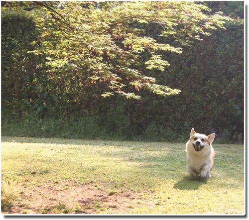 2012-0418庭遊び