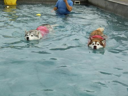 雨の水泳部5