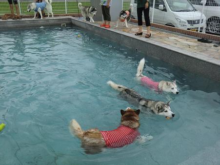 雨の水泳部3