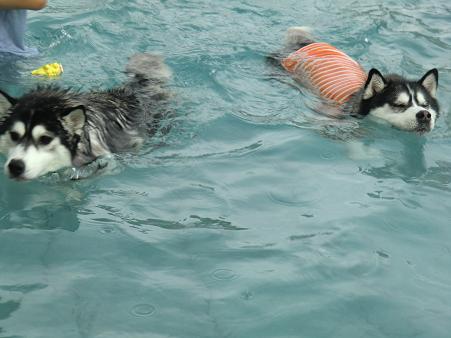 雨の水泳部9