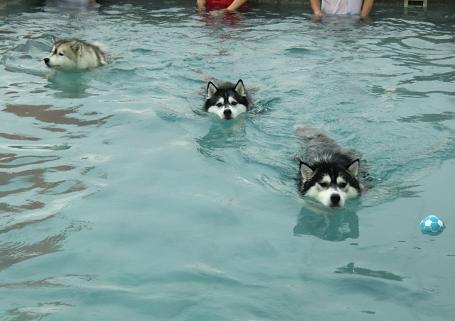 雨の水泳部14