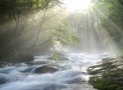 光と水と木