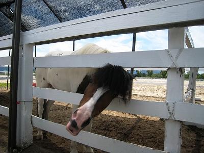 ジャジーランドの馬1