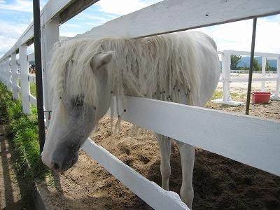 ジャジーランドの馬2