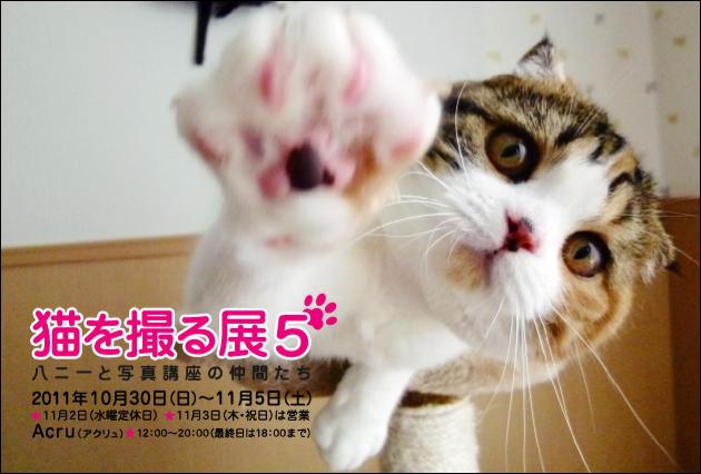 猫を撮る展5①