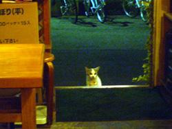 ピンボケだけど…猫