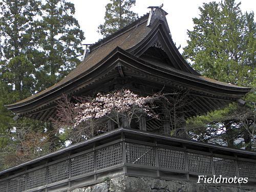 なんとか咲いていた総本山金剛峯寺の六時の鐘の桜