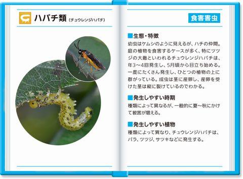 habachi_img_001.jpg