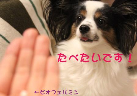 1202042.jpg