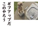 DSC03981_04